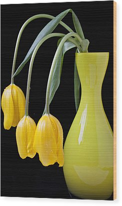 Three Yellow Tulips Wood Print by Garry Gay