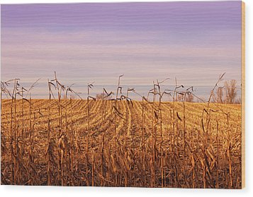 Wood Print featuring the photograph Through The Cornfield by Rachel Cohen