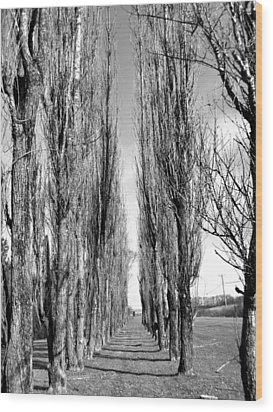 Through The Trees Wood Print by Jonathan Lagace