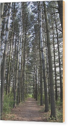 Wood Print featuring the photograph Through The Woods by Jeannette Hunt