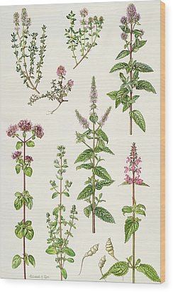 Thyme And Other Herbs  Wood Print by Elizabeth Rice