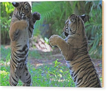 Tiger Cubs Boxing Wood Print by Larry Nieland