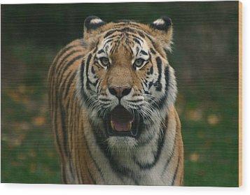 Tiger Wood Print by David Rucker