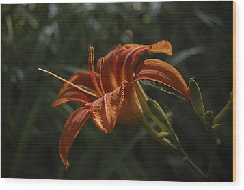 Tiger Lily Wood Print by Cindy Rubin