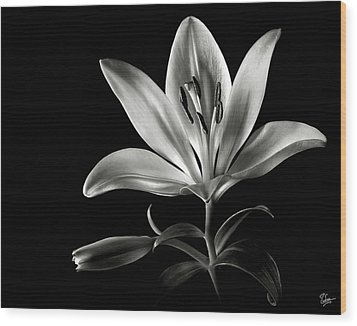 Tiger Lily In Black And White Wood Print