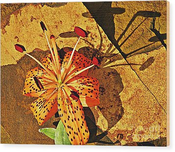 Tiger Lily Still Life  Wood Print by Chris Berry
