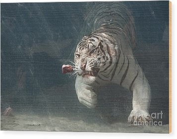 Tiger Shark Wood Print by Buck Forester