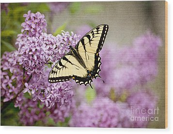 Wood Print featuring the photograph Tiger Swallowtail On Lilac Textured by Cheryl Davis