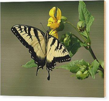 Tiger Swallowtail  Wood Print by TnBackroadsPhotos