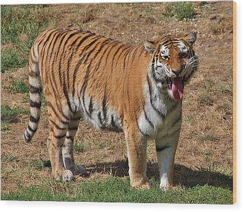 Tiger Yawn Wood Print by Alexander Spahn