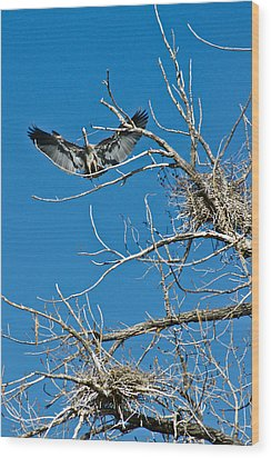 Time To Nest Wood Print by Colleen Coccia