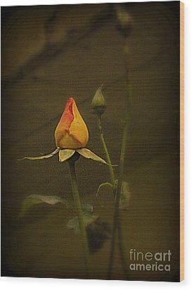Timeless Rose Wood Print by Carol  Hynes