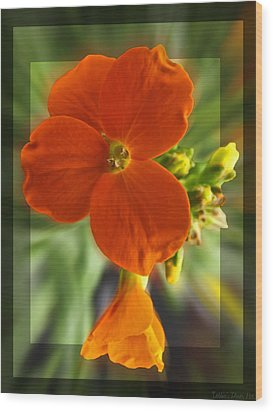 Wood Print featuring the photograph Tiny Orange Flower by Debbie Portwood