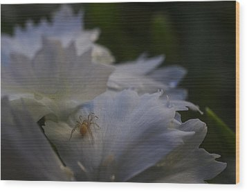 Tiny Spider On White Flower Wood Print by Scott McGuire