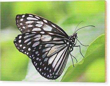 Tirumala Ishmoides Butterfly Wood Print by Lars Ruecker