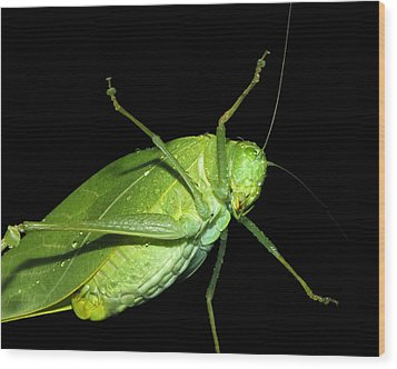 To An Insect Pretty Katydid Wood Print by Tracie Kaska