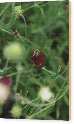 Wood Print featuring the photograph To Bee by Lorraine Devon Wilke