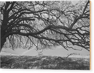 To Lie Here With You Would Be Heaven Wood Print by Laurie Search