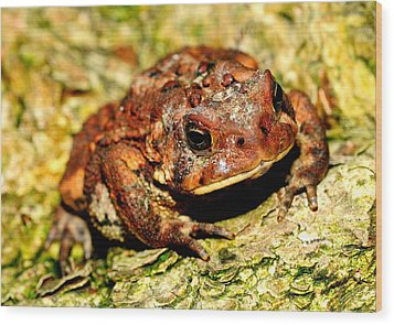 Wood Print featuring the photograph Toad by Joe  Ng
