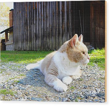 Toby Old Mill Cat Wood Print by Sandi OReilly