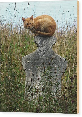 Tombstone Cat Wood Print by Still Watters