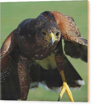 Top Raptor Wood Print by Skip Willits