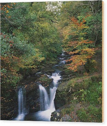 Torc Waterfall, Ireland,co Kerry Wood Print by The Irish Image Collection