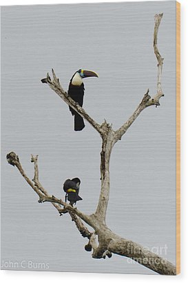 Wood Print featuring the photograph Toucans In The Trees by John Burns