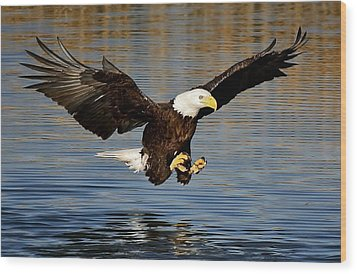Touch Down Wood Print by Paulette Thomas