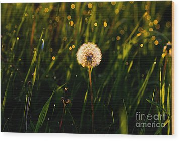 Wood Print featuring the photograph Touch Of Nature by Everett Houser