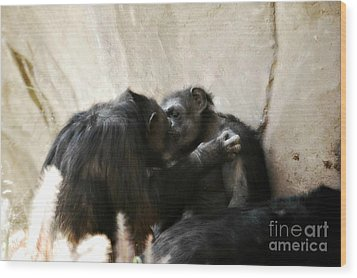 Touching Moment Gorillas Kissing Wood Print by Peggy Franz