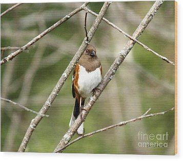 Towhee Female Wood Print by Yumi Johnson