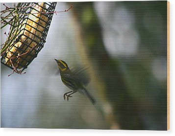 Townsend Warbler In Flight Wood Print by Kym Backland