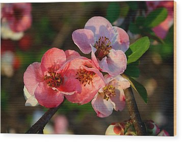 Wood Print featuring the photograph Toyo Nishiki Quince by Kathryn Meyer