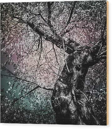 Tracing The Constellations Wood Print by Anthony Rego