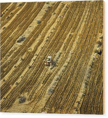 Tractor Cultivating Field Wood Print by Daniel Blatt