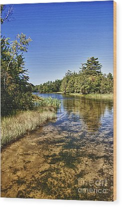 Tranquil Stream In Northern Michigan Wood Print by Christopher Purcell