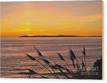 Tranquility  Wood Print by Johanne Peale