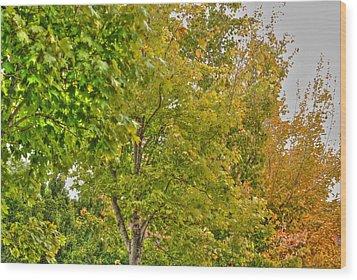 Wood Print featuring the photograph Transition Of Autumn Color by Michael Frank Jr