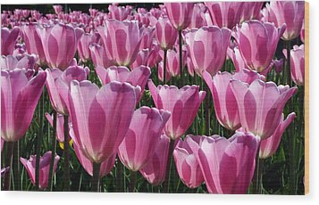 Wood Print featuring the photograph Translucent Tulips by Laurel Talabere