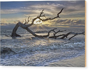 Treasures Of The Sea Wood Print by Debra and Dave Vanderlaan