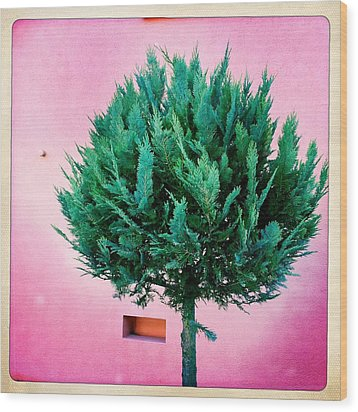 Tree And Colorful Pink Wall Wood Print by Matthias Hauser