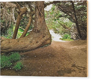 Wood Print featuring the photograph Tree And Trail by Bill Owen