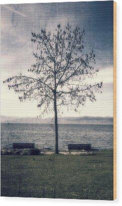 tree at lake Constance Wood Print by Joana Kruse