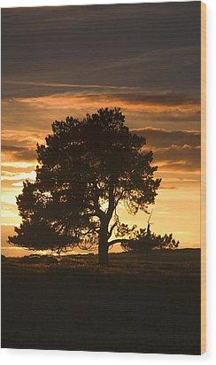 Tree At Sunset, North Yorkshire, England Wood Print by John Short