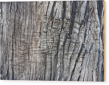 Wood Print featuring the photograph Tree Bark No. 1 Stress Lines by Lynn Palmer
