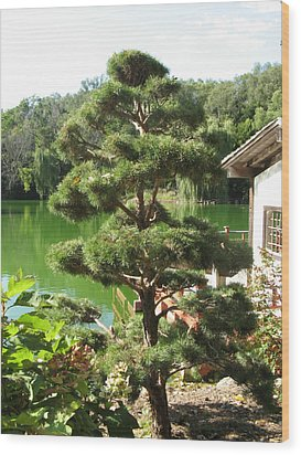 Tree Before Pond Wood Print