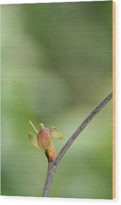 Tree Bud Wood Print by Peg Toliver
