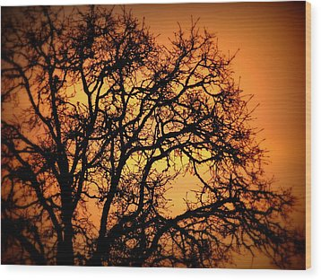 Tree Bursting With Setting Sun Wood Print by Cindy Wright