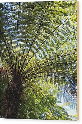 Wood Print featuring the photograph Tree Fern by Peter Mooyman